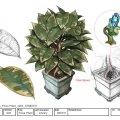 035_Ficus-Plant_v003.jpg