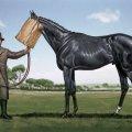 025_avante-card_ugly-horse.jpg