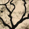 007_tree-wall-shadow.jpg