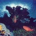 005_fish-bomby-painting_02.jpg