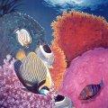 006_fish-coral-painting_01.jpg