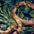 009_bower-birds_5-4.jpg