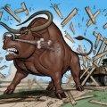 014_bull-frame_03.jpg